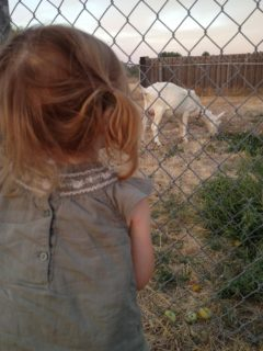 Goat Fencing 101: Got Your Goat? Now You Need a Plan to Keep It