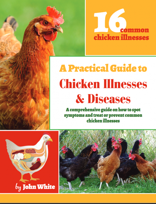 Ways to prevent and treat common chicken diseases.