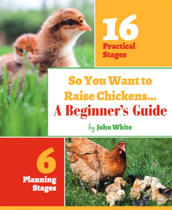 Beginner's Guide to Raising Chickens
