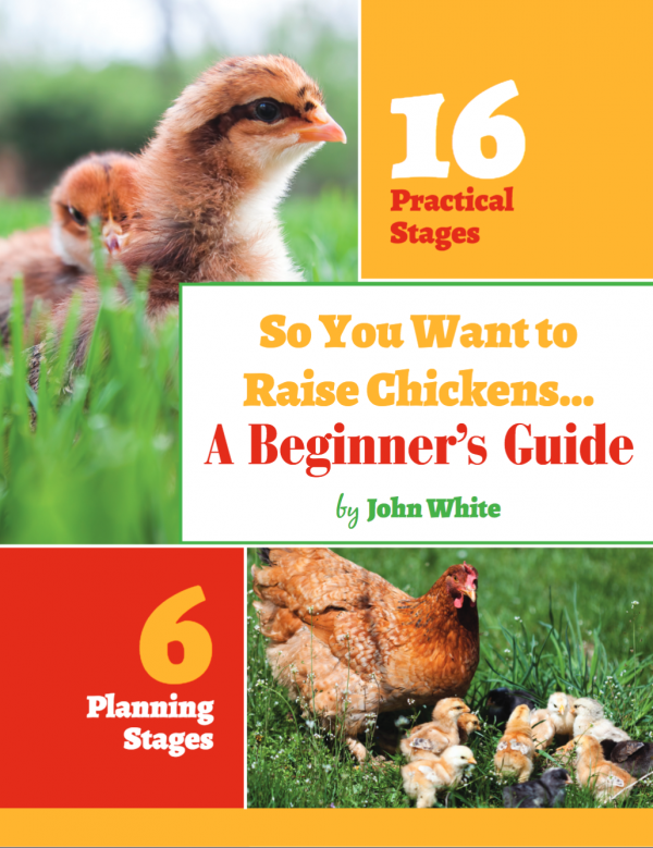 Beginner's Guide to Raising Chickens