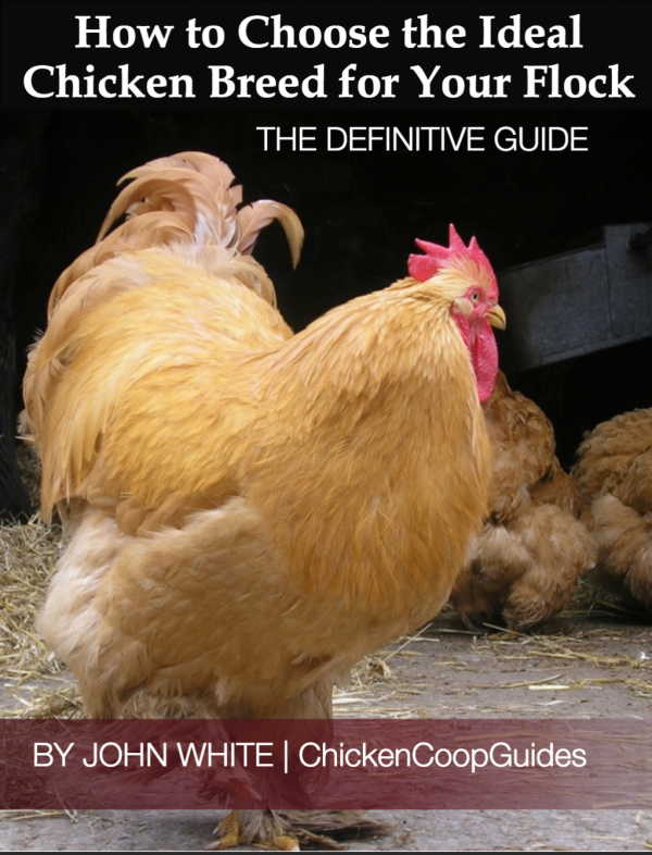 Great chicken breed information!